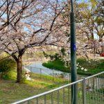 桃ヶ池公園(周辺)